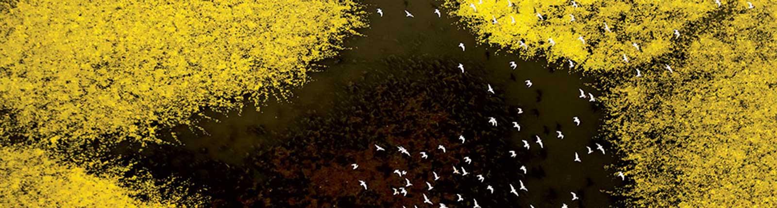 Yellow2018